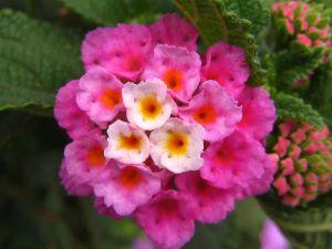 Pink_Bouquet_3918712010_o-2.jpg