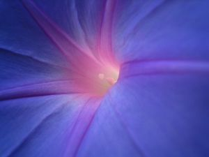 Star_Bright_Faerie_Flower_3865931925_o.jpg