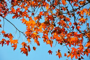 Fall into the Sky_5358150649_o.jpg
