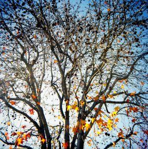 Winter_5319222662_o.jpg