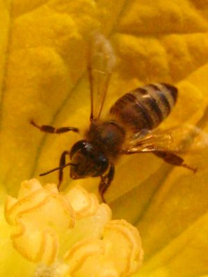 Bee-ing_3008984171_o.jpg