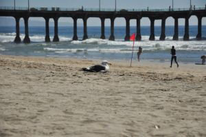 Manhattan Beach Day_5585761179_o.jpg