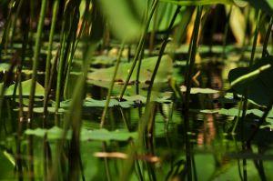 Pond_Zen_4671865079_o.jpg