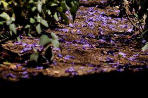 Purple_Zen_4672494782_o.jpg