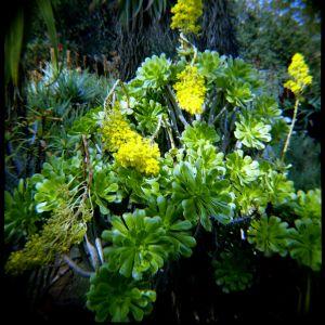 Succulents_4699080596_o.jpg