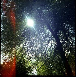 Tree_Spirit_4644269496_o.jpg