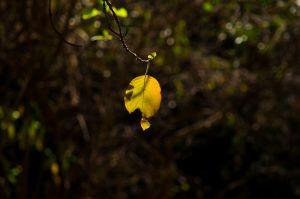 Yellow_Zen_4672499382_o.jpg