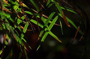 c14-Fiery_Dragonfly_Zen_4672493748_o.jpg
