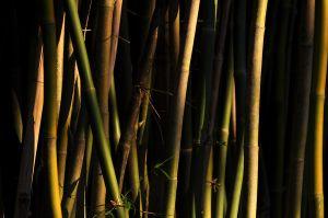 c21-Bamboo_Dusk_4896526327_o.jpg